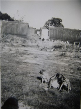 Photo:John's dogs in front of the huts